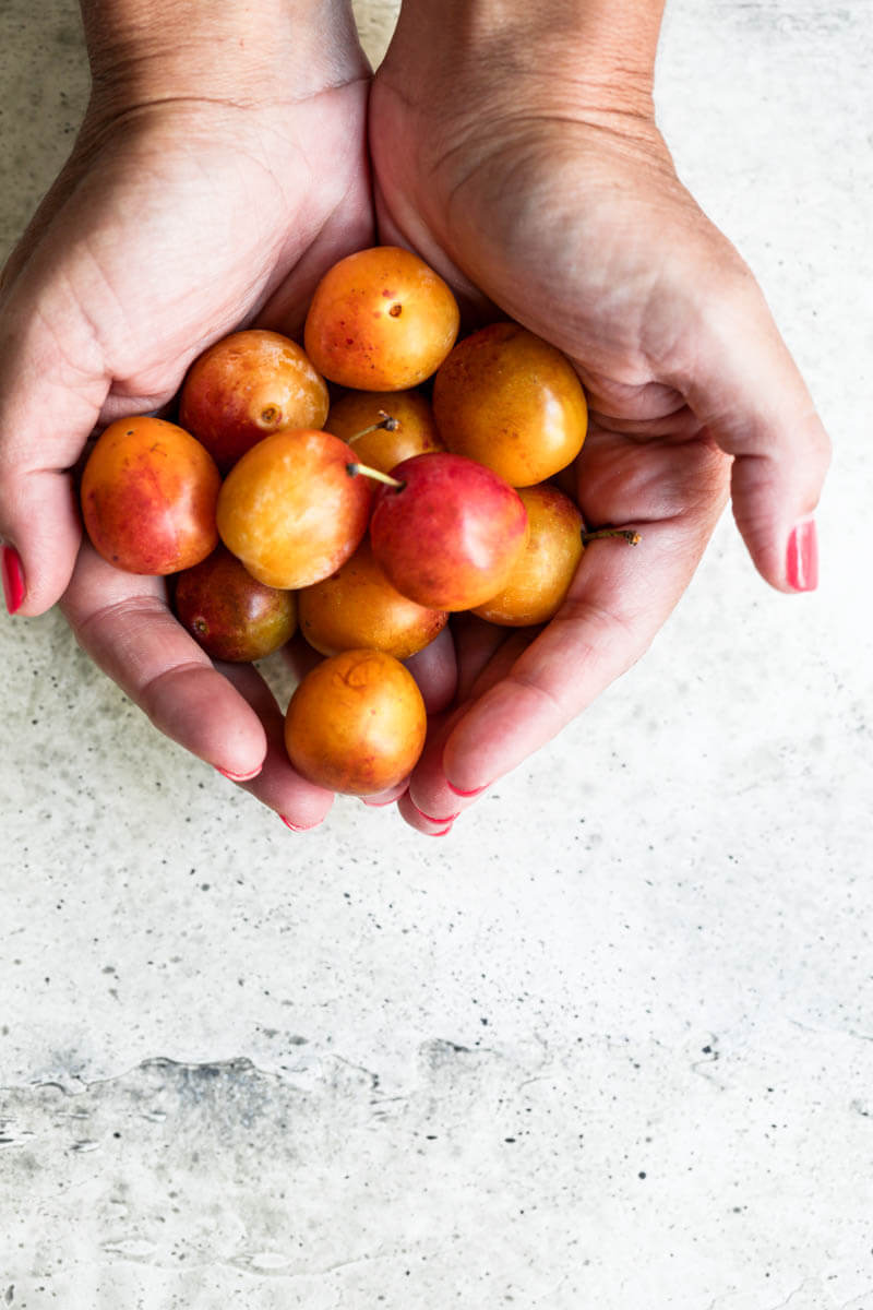 Overhead shot of 2 hands holding a bunch of Mirabelle Plums
